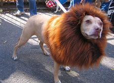 披着狮鬃的狗