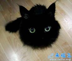 你可耻地把我拍成一个猫球了