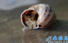 这年头猫也蜗居了