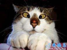 淘气的七星瓢虫,搞怪的猫咪