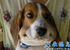 偷吃东西的狗狗被主银发现