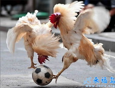 激烈的鸡鸡街头足球赛