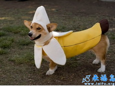 香蕉你个巴拉狗