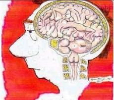 男人的大脑构造