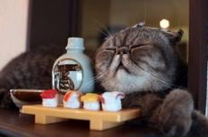 醉酒后的猫咪