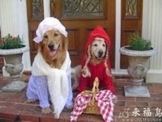 小红帽结婚了