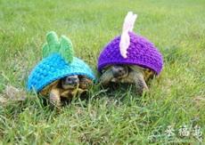 这货谁做给小乌龟的!