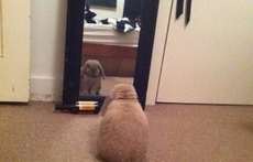 每天對著鏡子喊十遍我是瘦子我是瘦子!,堅持一個禮拜,鏡子就會覺得你特別不要臉。