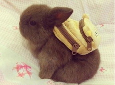 當兔子背上書包后,萌哭了