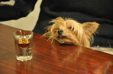 我还没醉,再给我来一杯!