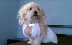 迷人的狗小姐