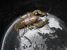 一张小龙虾在水桶里的照片,居然拍出了宇宙科幻大片的感觉