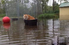 妈蛋,出来划船忘记带桨了!