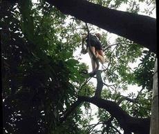 奔放的女汉子又上树了!