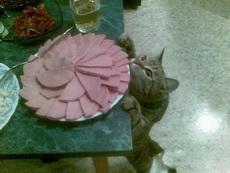我就看看,不吃!
