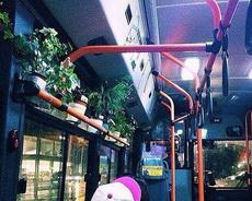 这是个充满活力的公交车