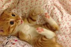 主人,快過來抱抱我嘛!