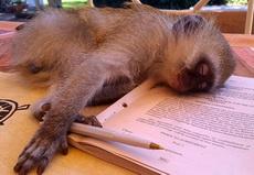 为了读研,你说我容易吗?