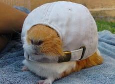 帽子总要倒扣着戴才帅!