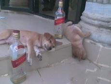 酒量不如当年了