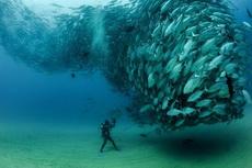这潜水员的压力一定很大