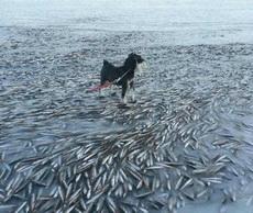 鱼儿就这样被冻在了湖面下
