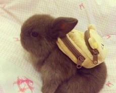 我要去上學了