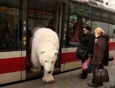 战斗民族的公交车是这样的!