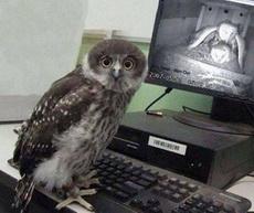 想不到你是这样的猫头鹰!