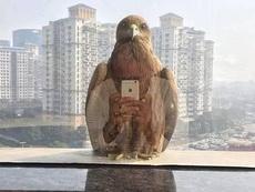 老鹰竟然会拍照
