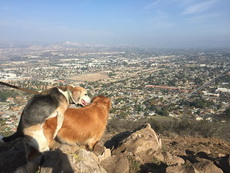 山上的风景好壮丽啊!
