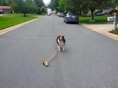 防止被吃,带狗出走