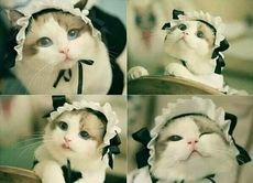 这不是S娘的最爱猫娘吗???