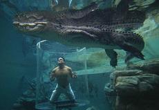 鳄鱼今天吃罐头,可是怎么打开恩