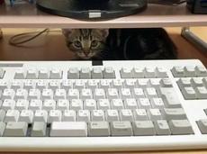 你光顾着工作,不理我吗?