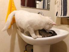 最喜欢和女朋友在浴缸里腻歪了