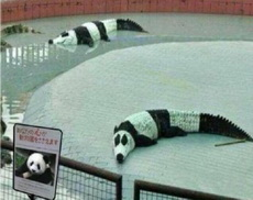 这熊猫咋感觉有些怪怪的呀