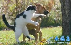 猫咪暴打小狗