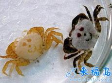 搞笑的小螃蟹
