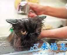 可怜的小黑猫在浴盆里痛苦的洗着澡。