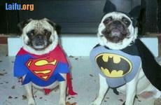 超人與扁幅俠
