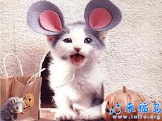 猫猫大变身