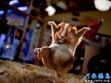 小小舞蹈家