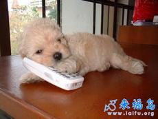 狗狗打电话