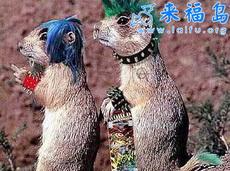 """松鼠看不下去了,愤然当起了""""朋克""""-动物们神态各异的表情"""