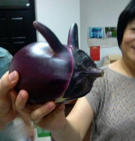 看,我抓到了一只茄子精