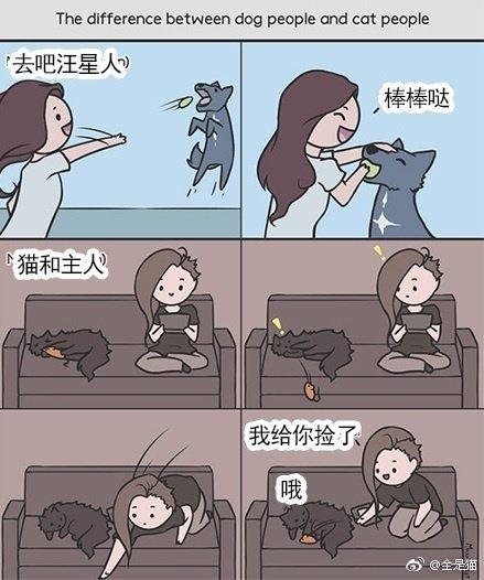 猫和狗的区别