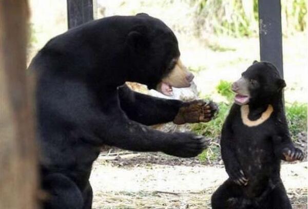 熊孩子,抱一个。你叫谁熊孩子呢?莫挨老子