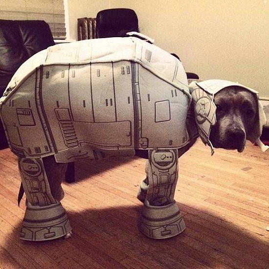 我家的机器狗
