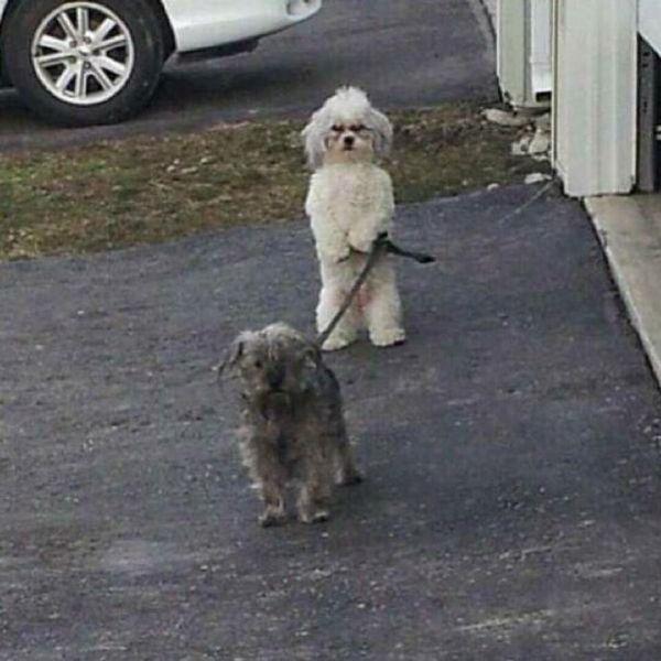 种族歧视,从狗做起。